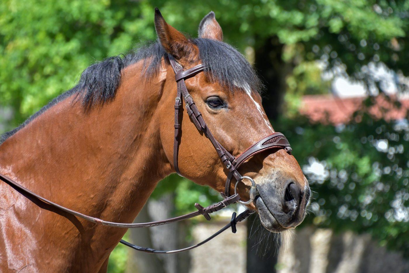 Ran4 v Jelke - vozenie na koňoch