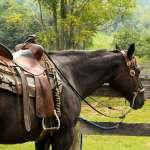 kone na ranči v Jelke pri Malom Dunaji